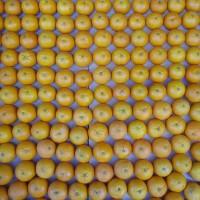 Pomeranče vypěstované v Katalánsku