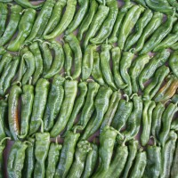 Papriky vypěstované v Katalánsku