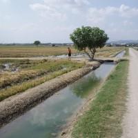 Zavlažovací kanály pro rýži v Deltě Ebra