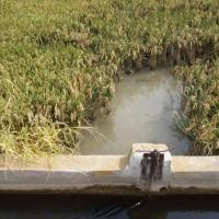 Závlaha rýžového pole