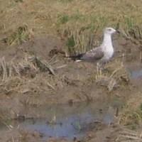 Pozorování ptáků v Deltě řeky Ebro