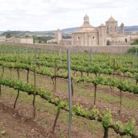 Vinice u kláštera Poblet