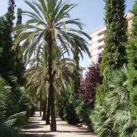 Palmy v parku