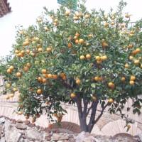 Nějaké citrusové plody