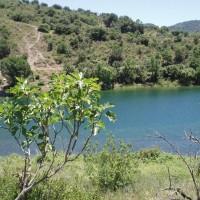 Fíkovník na břehu přehrady Siurana