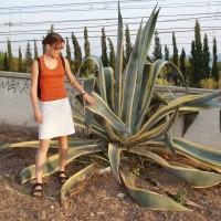 Větší sukulentní rostlina