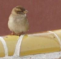 Ptáček v parku Güell