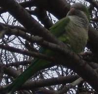 Papoušek v parku Güell