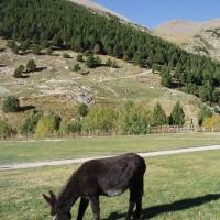 Osel ve Vall de Núria